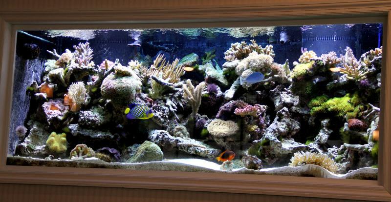 Long Island Aquarium Service